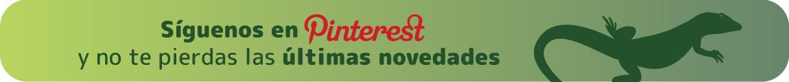 Lagarto Pinterest